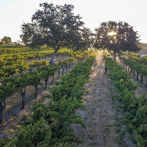 8 Must-Visit Wineries In Paso Robles, California