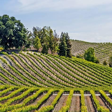 The World's Top 10 Wine Destinations for 2020