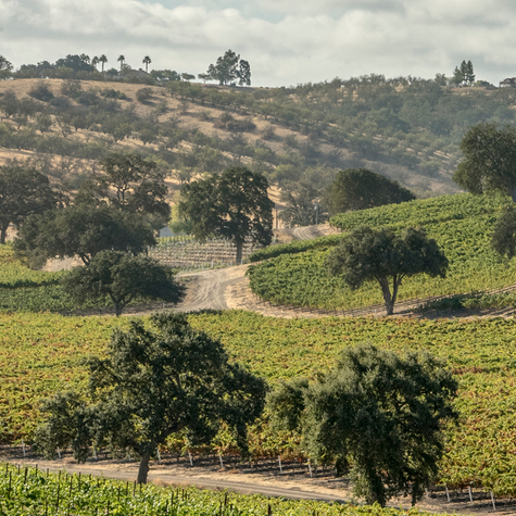 Paso Robles: Discover California wine country at its loveliest